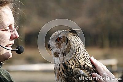 Coruja de Eagle