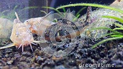 Yada spielt mit Ihren Fisch Lippen