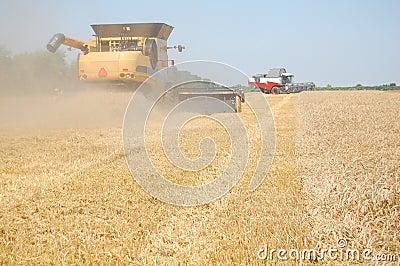 Cosecha del trigo