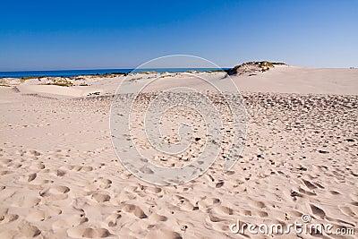 Costa costa del mar Báltico