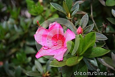 Costa Rica Flower 04