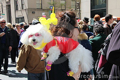 Costumed dog Editorial Stock Photo