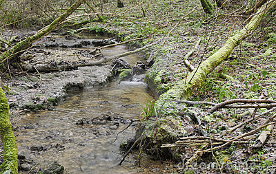 Cotswold stream in frozen Woodland