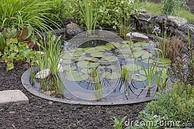 Cottage garden with pond