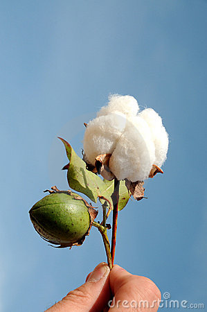 Free Cotton Stock Images - 17973764