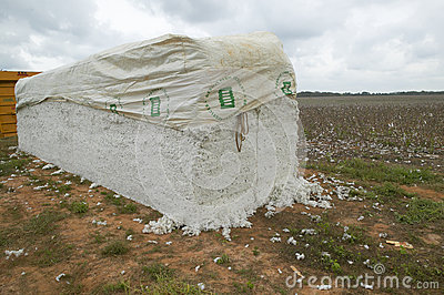 Cotton bales Editorial Photo