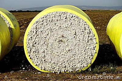 Cotton Block