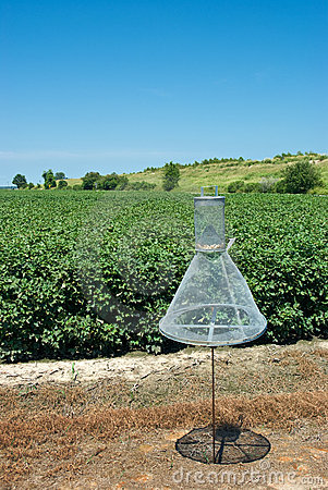 Cotton Bollworm Wire Trap
