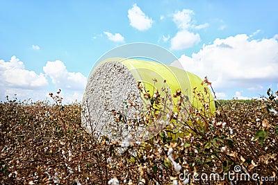 Cotton module
