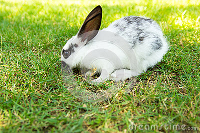 how to stop rabbits from eating grass