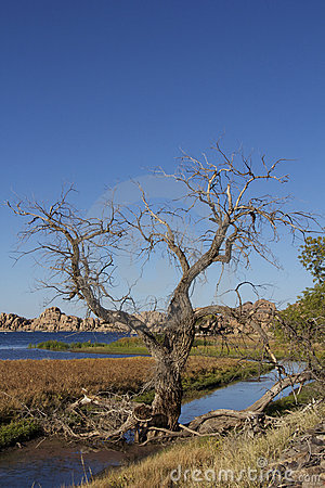 Cottonwood and Lake