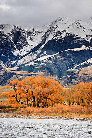 Cottonwoods and Mountains, Montana