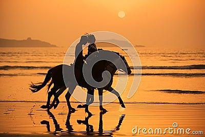 Coucher du soleil de chevaux