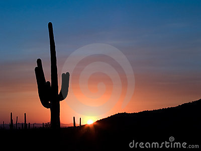 Coucher du soleil de Saguaro