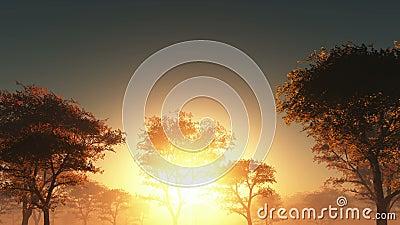 Coucher du soleil et forêt en brouillard