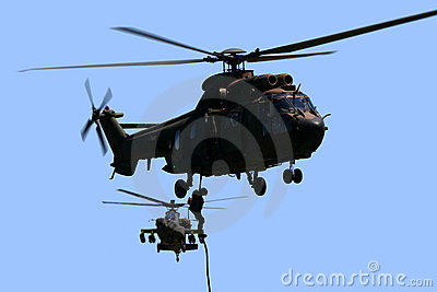 Cougar and Apache