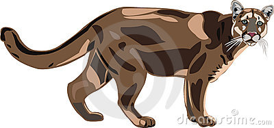 Cougar is North American largest cat.