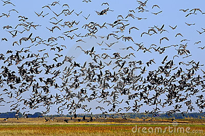 Countless Birds Royalty Free Stock Images - Image: 19182329