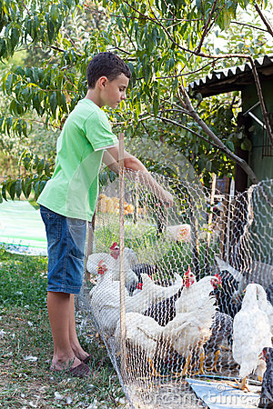 Country boy feeding chickens
