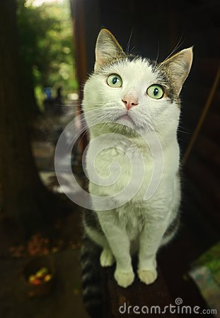 Free Country Cat Sit On Porch Royalty Free Stock Photos - 102589888