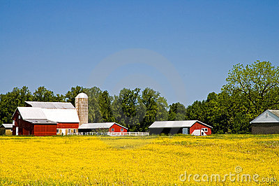 Country farm in springtime