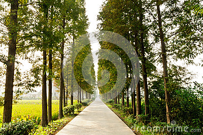 Country forest road