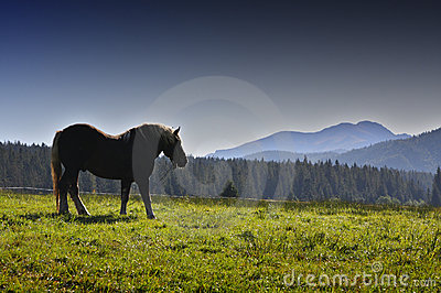 Country and horse