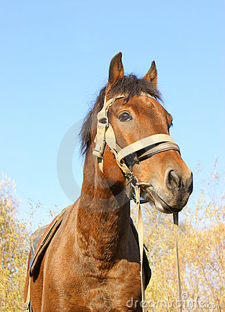 Country horse portrait