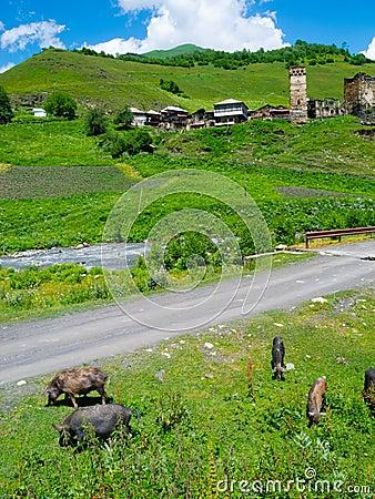 Country landscape in Davberi