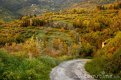 Country lane in Italy
