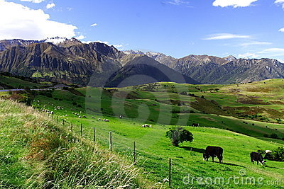 Country life new zealand (2)