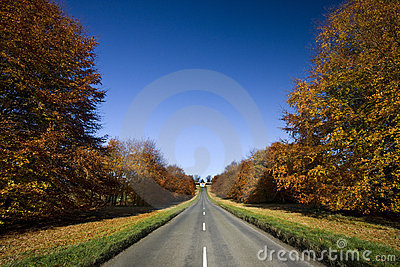 Country road in Autumn - England