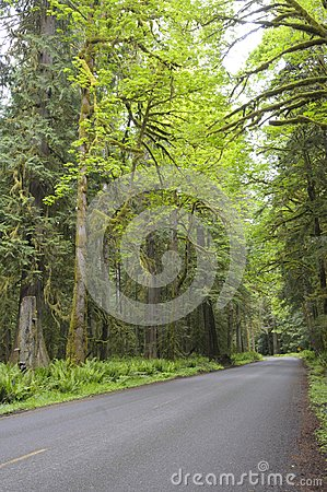 Country road in rain forest