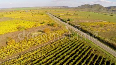 Country road through the vineyards in fall colors, aerial view.  stock video footage