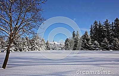 Country winter scene