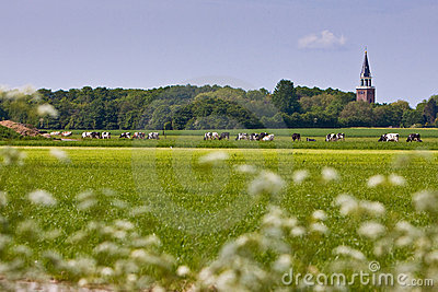 Countryside with church and cows