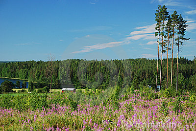 Countryside in Hankasalmi  of Central Finland
