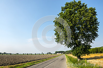 Countryside near Pavia