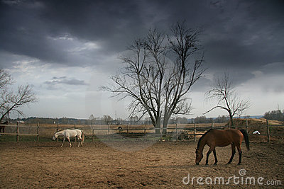 Couple of brown and white horses