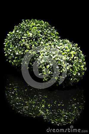 Couple of bush