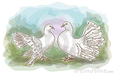 Couple doves.