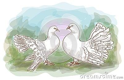 Couple doves.