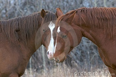 Couple of horses in love