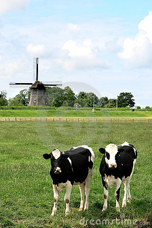 Free Couple Of Cows In Dutch Landscapes With Mill Royalty Free Stock Image - 10910936