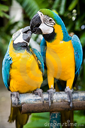 Free Couple Of Parrots Royalty Free Stock Photo - 12914205