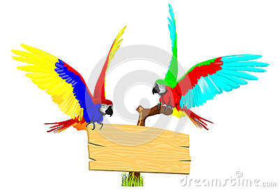 Couple parrot