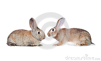 Couple of rabbits faced