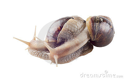 Couple of snails