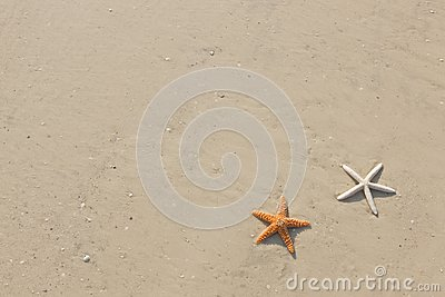 Couple of starfish on a tropical beach