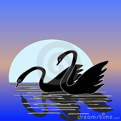 Couple of Swan with Moonlight